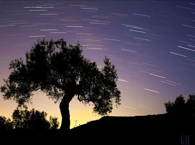OliveTreeUnderStarlight